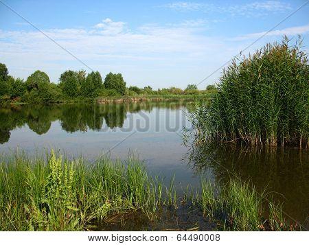 Lake, Iand Trees On Bank