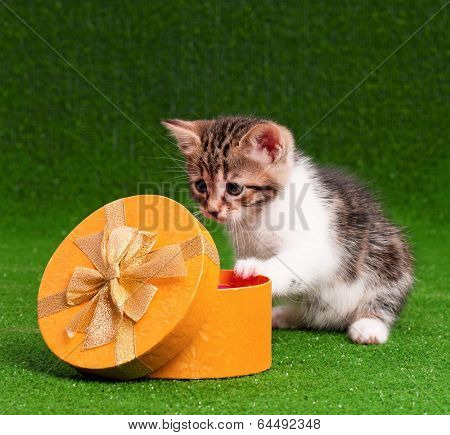 Cute kitten with gift box on artificial green grass