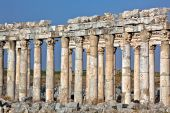 foto of cardo  - Pompey made Apamea  - JPG