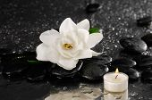 pic of gardenia  - White gardenia and candle on pebbles  - JPG