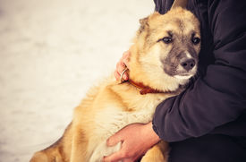 foto of baby sheep  - Dog Shepherd Puppy and Woman hugging Outdoor Lifestyle and Friendship concept - JPG