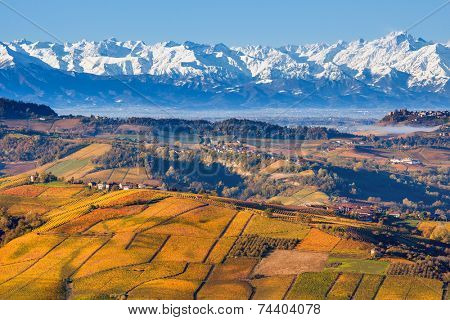 Autumnal hills with yellow and orange vineyards and snowy mountain ridge on background in Piedmont, Northern Italy.
