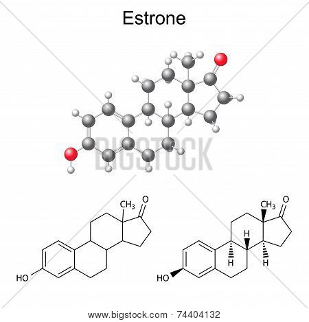 Structural Chemical Formulas And Model Of Estrone Molecule