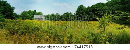 Generic barn in a field full of yellow flowers