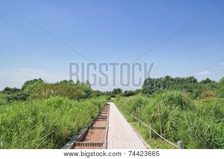 Pathway In A Silver Grass Field