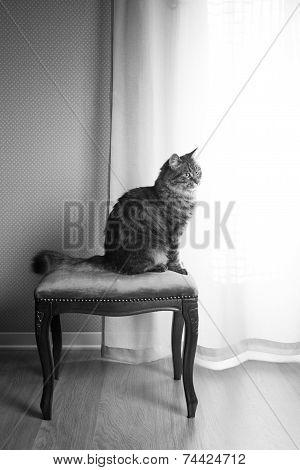 Beautiful Cat On Vintage Stool