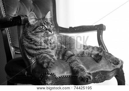 Cat On Red Velvet Chair