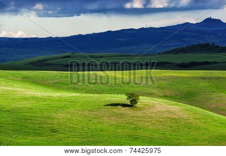 lonely tree among a field lit with the sun through a thundercloud