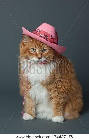 Ginger Cat in Pink Cowboy Hat