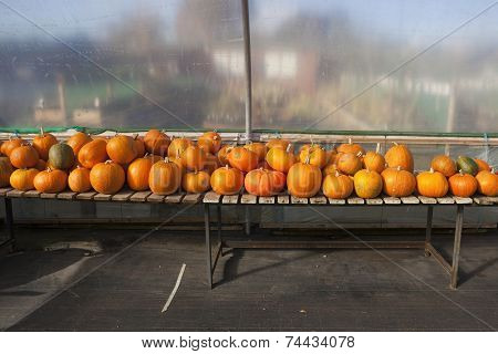 Ripe Pumpkins And Squashes