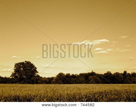 Indiana Corn Field