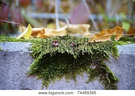 Moss bed in autumn