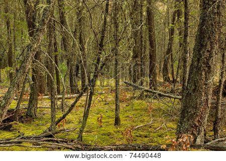 Deep Green Forest
