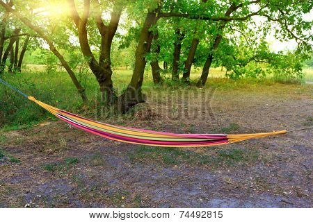 hammock in summer forest camp