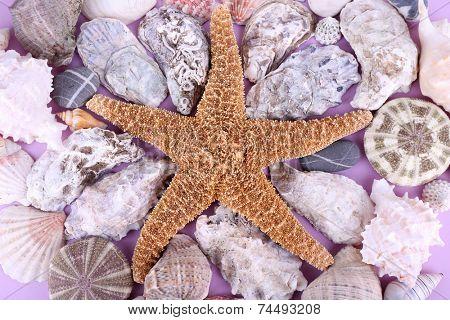 Sea souvenirs closeup