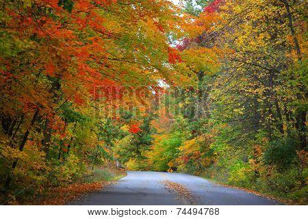 Road through bright autumn trees
