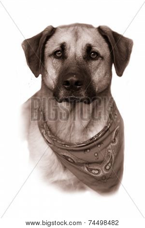 Large Mixed Breed Dog In Vintage Sepia