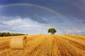 image of hay bale  - Field of hay - JPG