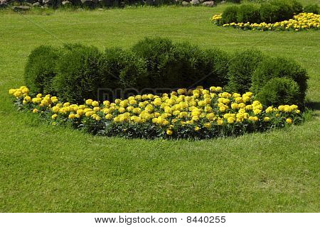 Flower Bed In Beautiful Garden