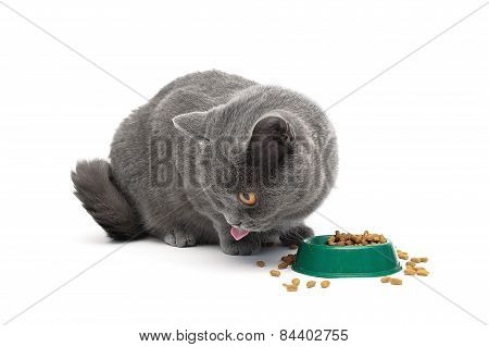 Gray Cat Sits Beside A Bowl Of Food On A White Background