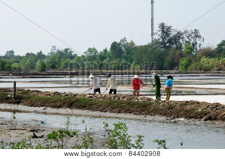 Farmers working rice paddy