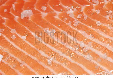 Fresh Salmon Fillet Close Up