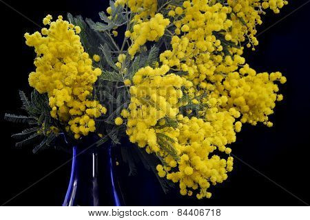 Bouquet of mimosa in the blue vase.