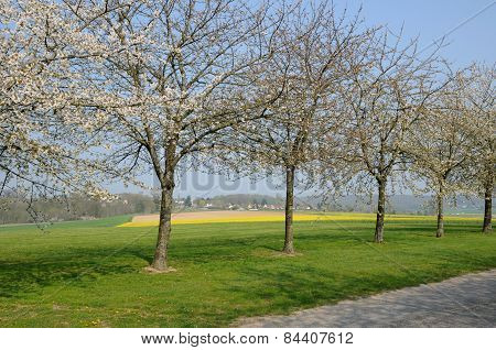 France, Flowering Trees In Aincourt