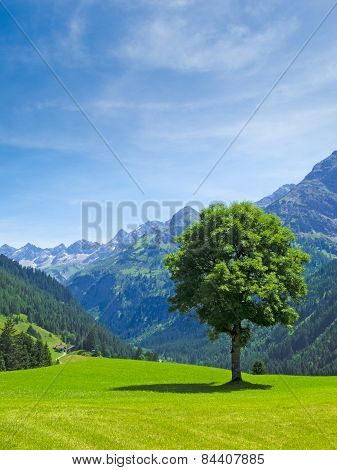 tree, alp, mountain landscape