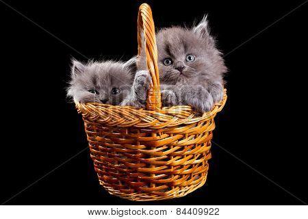 Fluffy Kittens