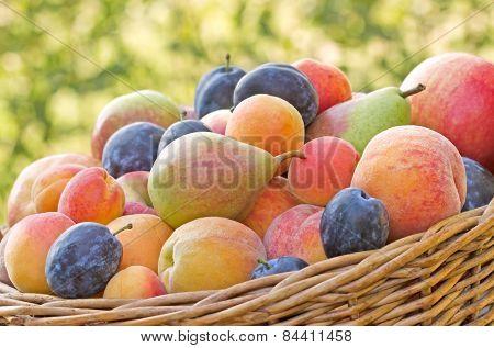 Organic fruits in a wicker basket