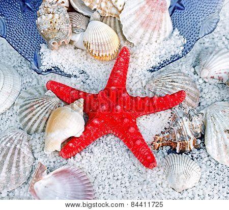 Starfish, sea slugs and sea shells