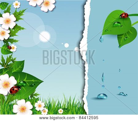 Spring Background With Flowers, Leaves And Ladybug