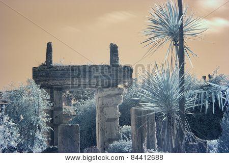 Tropical Ruins