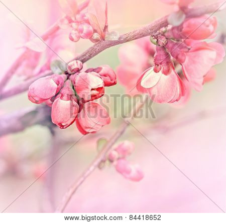 Soft focus on beautiful blooming - flowering