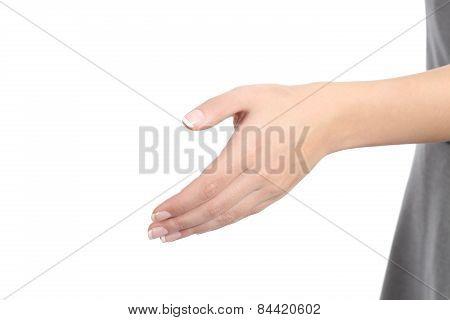 Woman Hand Handshaking