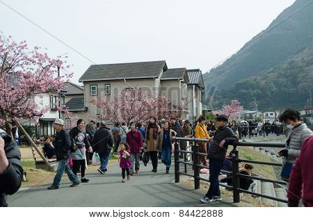 Tourists Are Visiting The Cherry Blossoms