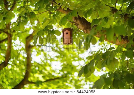 Bird House On A Tree In Summer, Between Green Foliage