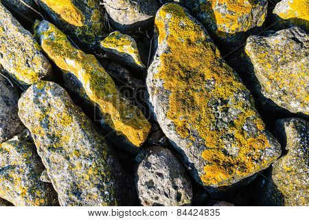 Yellow Lichen On The Rocks