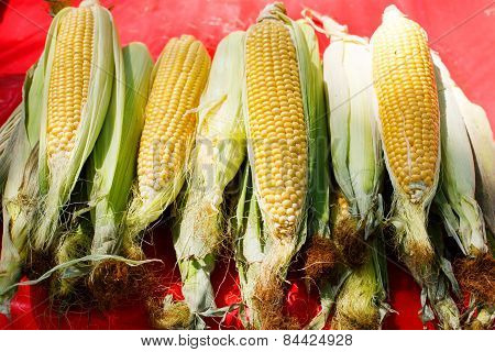 Organic Fresh Corn From Mediterranean Farmers Market In Provence