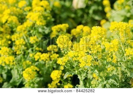 Rape Of The Flower Garden