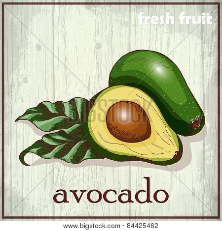 Hand drawing illustration of avocado. Fresh fruit sketch background