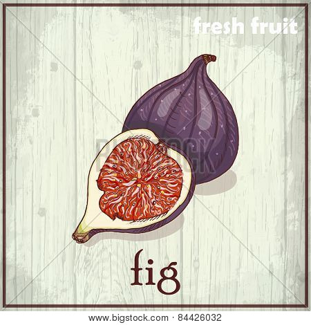 Hand drawing illustration of fig. Fresh fruit sketch background