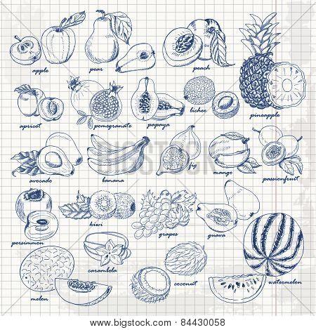 Set of fruits on paper. Vector hand drawing sketch illustration