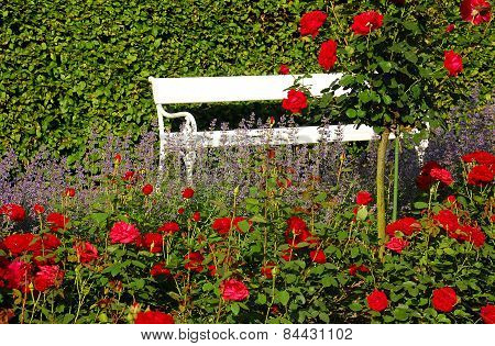 White Bench And Red Roses In The Park