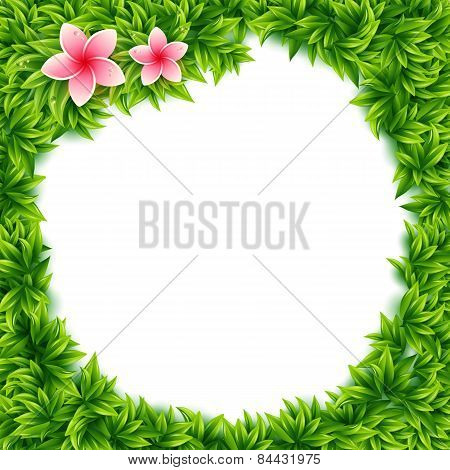 Fresh green leaves and tropical flowers frame