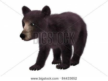 Little Black Bear