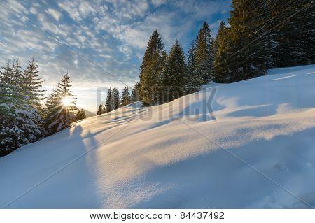 sunbeams through tree at winter lanscape in tirol