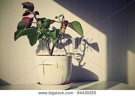 Retro Houseplant In A Ceramic Pot
