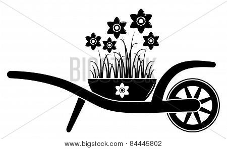 Wheel Barrow And Daffodils